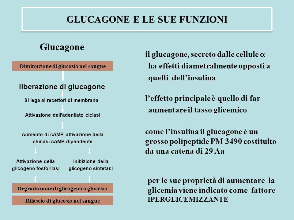 GLUCAGONE E LE SUE FUNZIONI