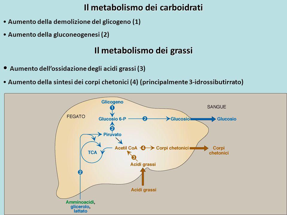 Il metabolismo dei carboidrati Il metabolismo dei grassi