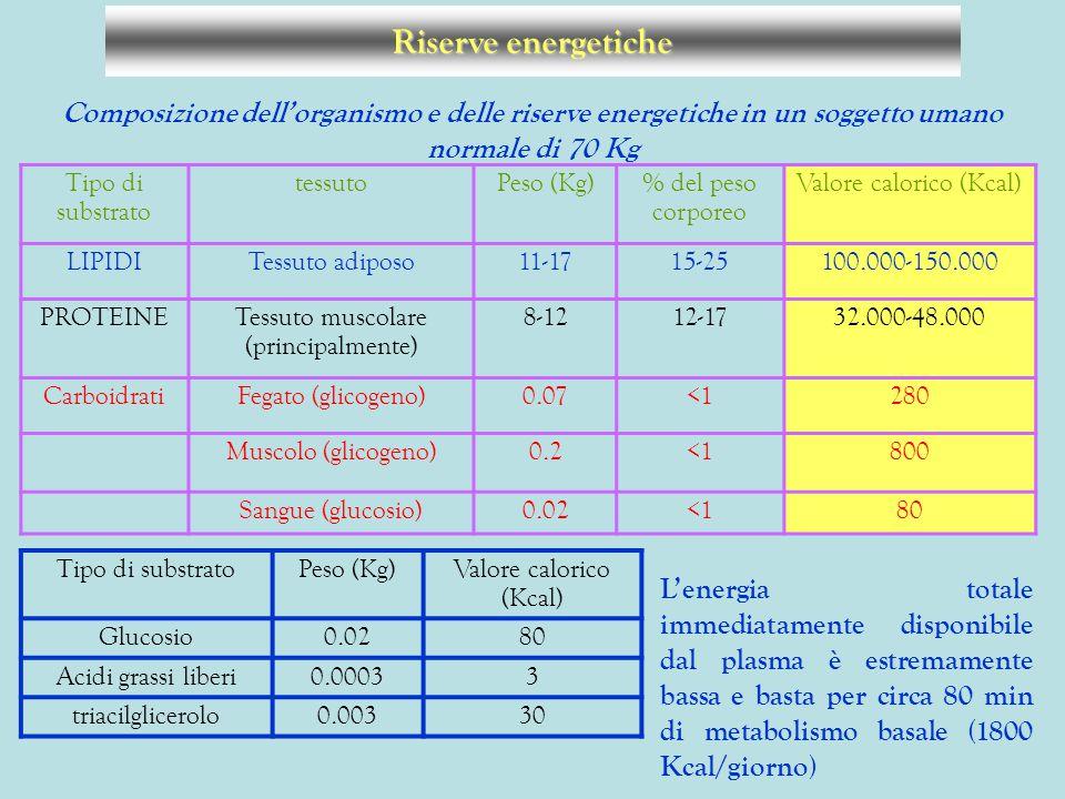 Riserve energetiche Composizione dell'organismo e delle riserve energetiche in un soggetto umano normale di 70 Kg.
