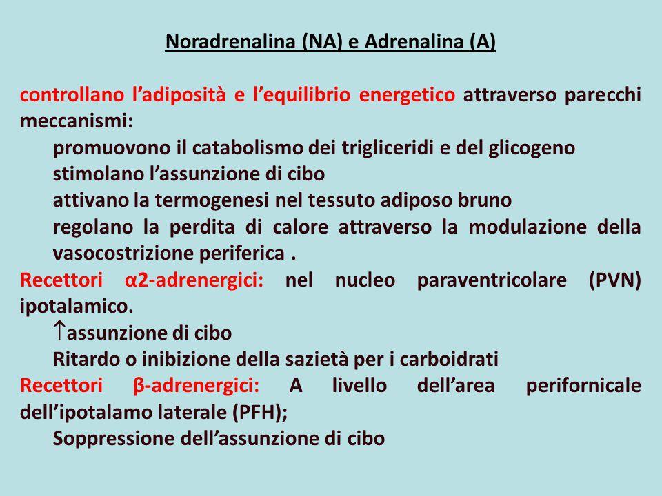 Noradrenalina (NA) e Adrenalina (A)