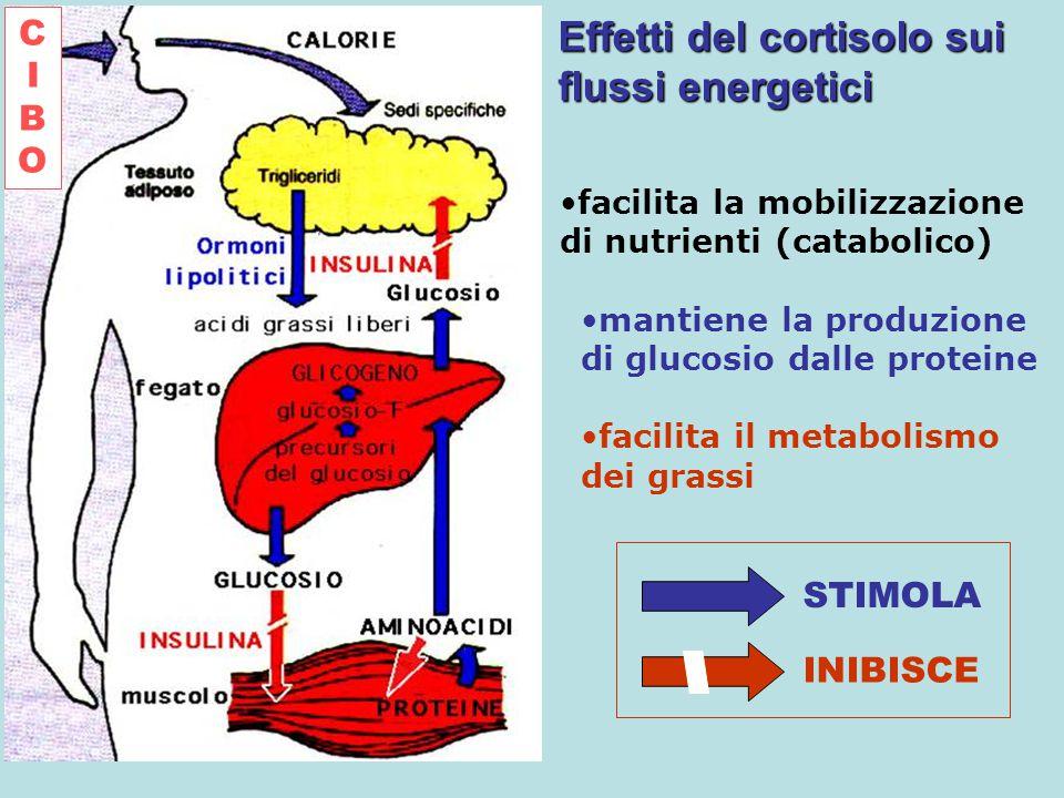Effetti del cortisolo sui flussi energetici