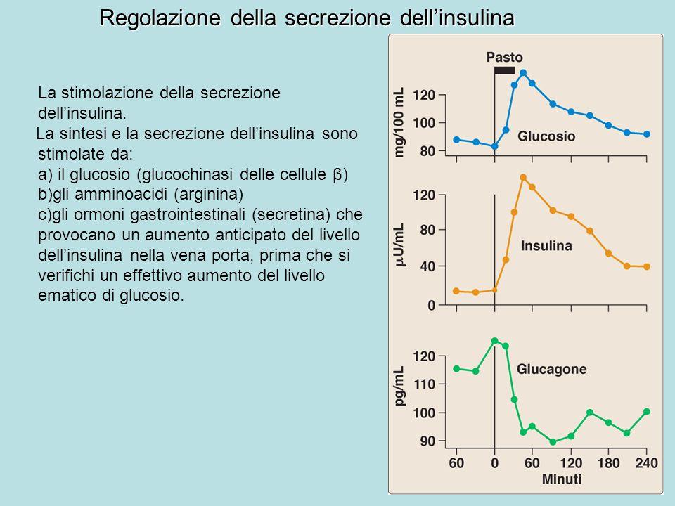Regolazione della secrezione dell'insulina