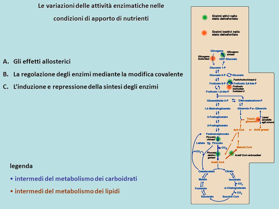 Le variazioni delle attività enzimatiche nelle