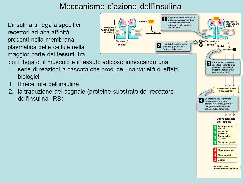 Meccanismo d'azione dell'insulina