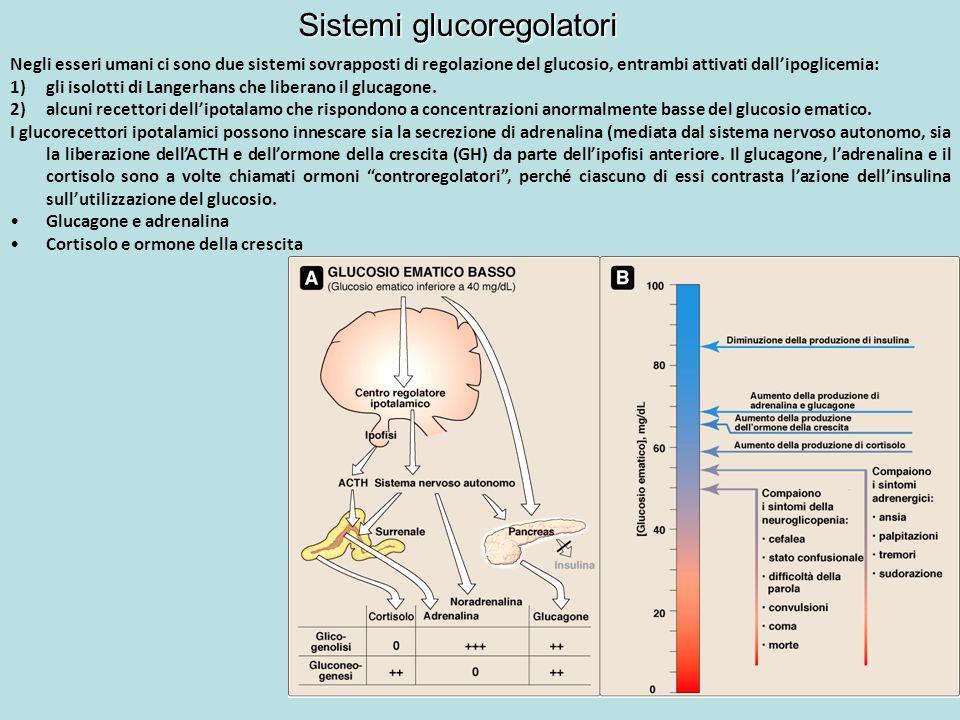 Sistemi glucoregolatori
