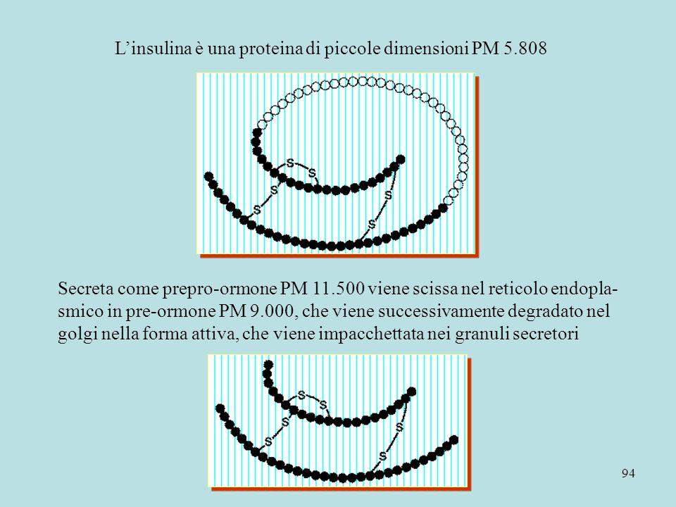 L'insulina è una proteina di piccole dimensioni PM 5.808