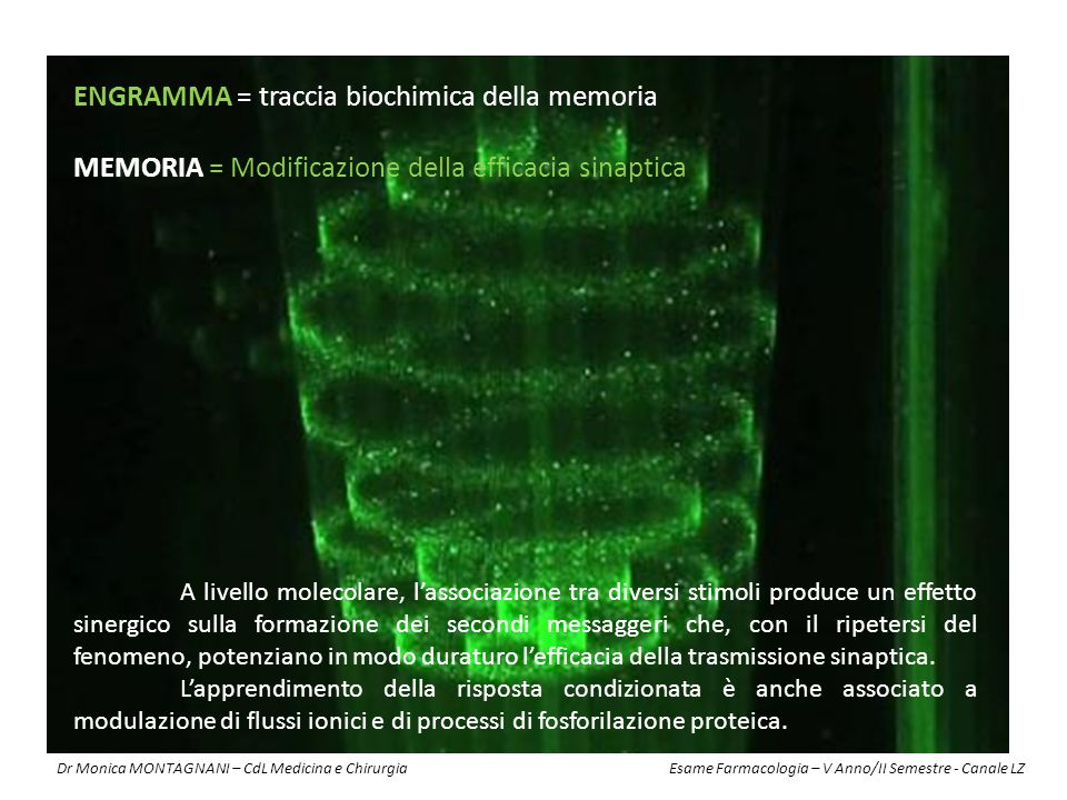 ENGRAMMA = traccia biochimica della memoria