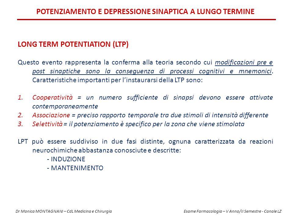 Potenziamento e Depressione sinaptica a lungo termine