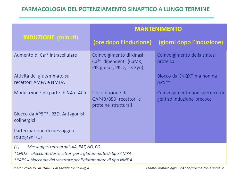 Farmacologia del potenziamento sinaptico a lungo termine