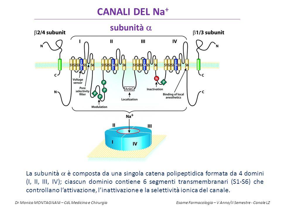 CANALI DEL Na+ subunità 