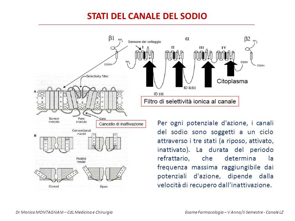 STATI DEL CANALE DEL SODIO