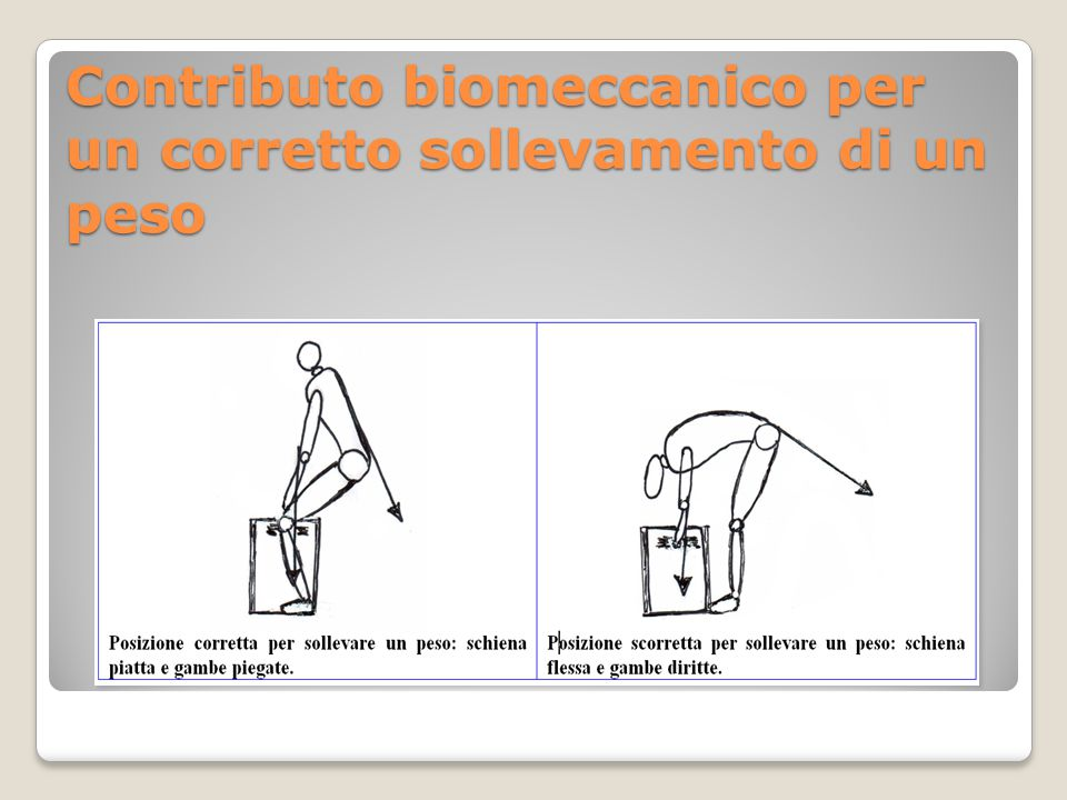 Contributo biomeccanico per un corretto sollevamento di un peso