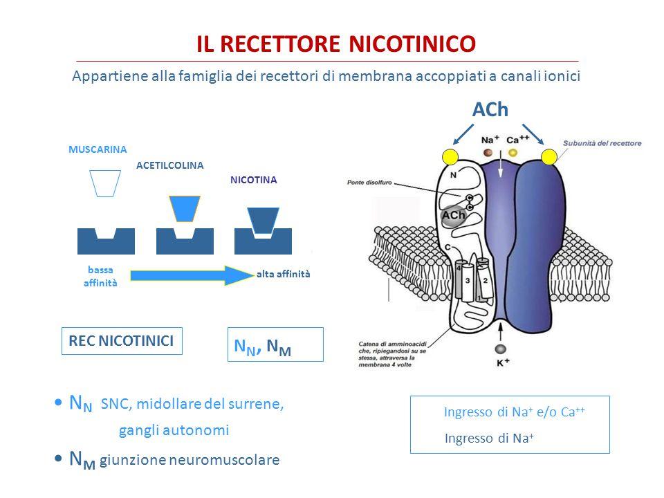 IL RECETTORE NICOTINICO