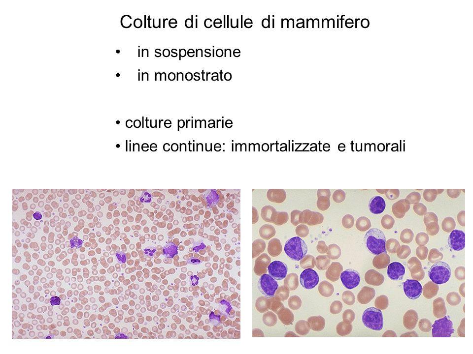 Colture di cellule di mammifero
