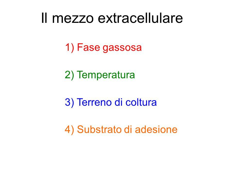 Il mezzo extracellulare