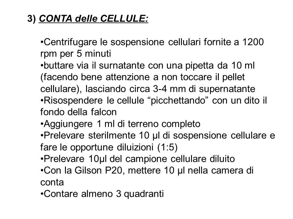 3) CONTA delle CELLULE: Centrifugare le sospensione cellulari fornite a 1200 rpm per 5 minuti.