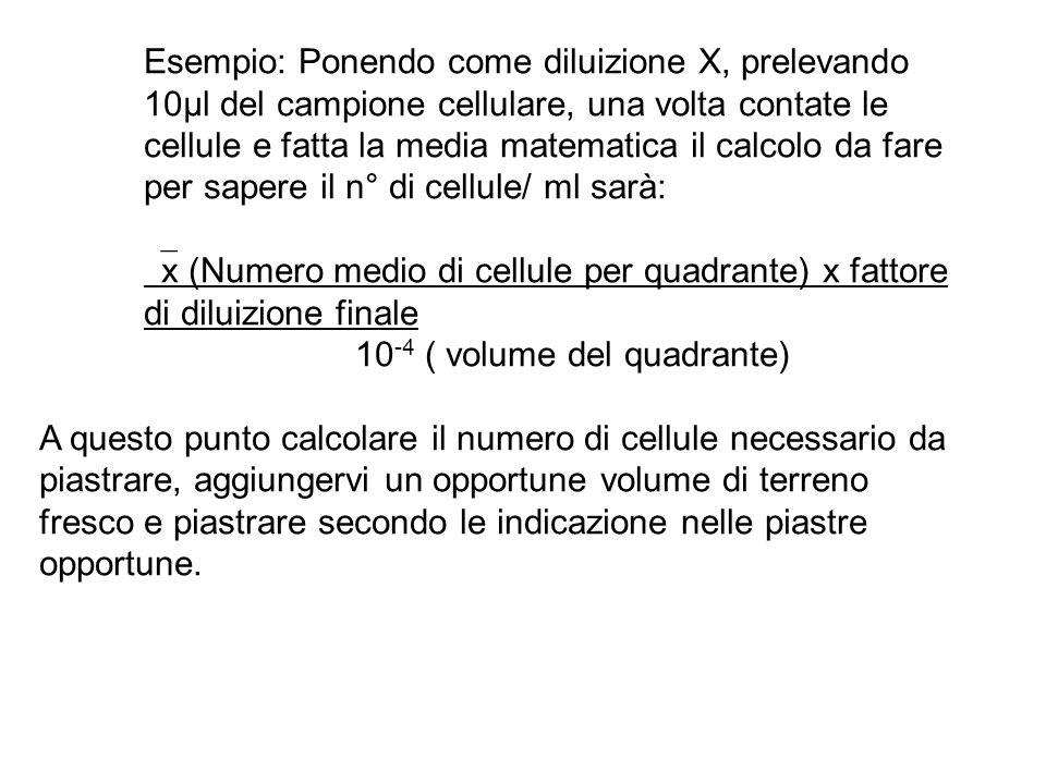 Esempio: Ponendo come diluizione X, prelevando 10µl del campione cellulare, una volta contate le cellule e fatta la media matematica il calcolo da fare per sapere il n° di cellule/ ml sarà: