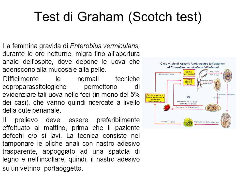 Test di Graham (Scotch test)