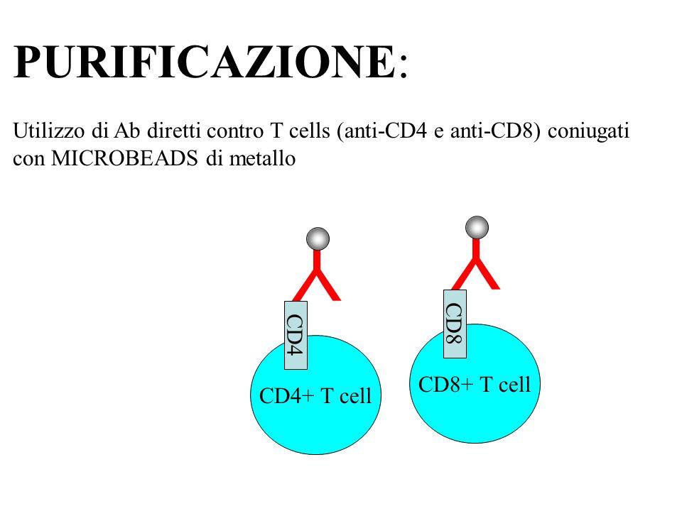 PURIFICAZIONE: Utilizzo di Ab diretti contro T cells (anti-CD4 e anti-CD8) coniugati con MICROBEADS di metallo.