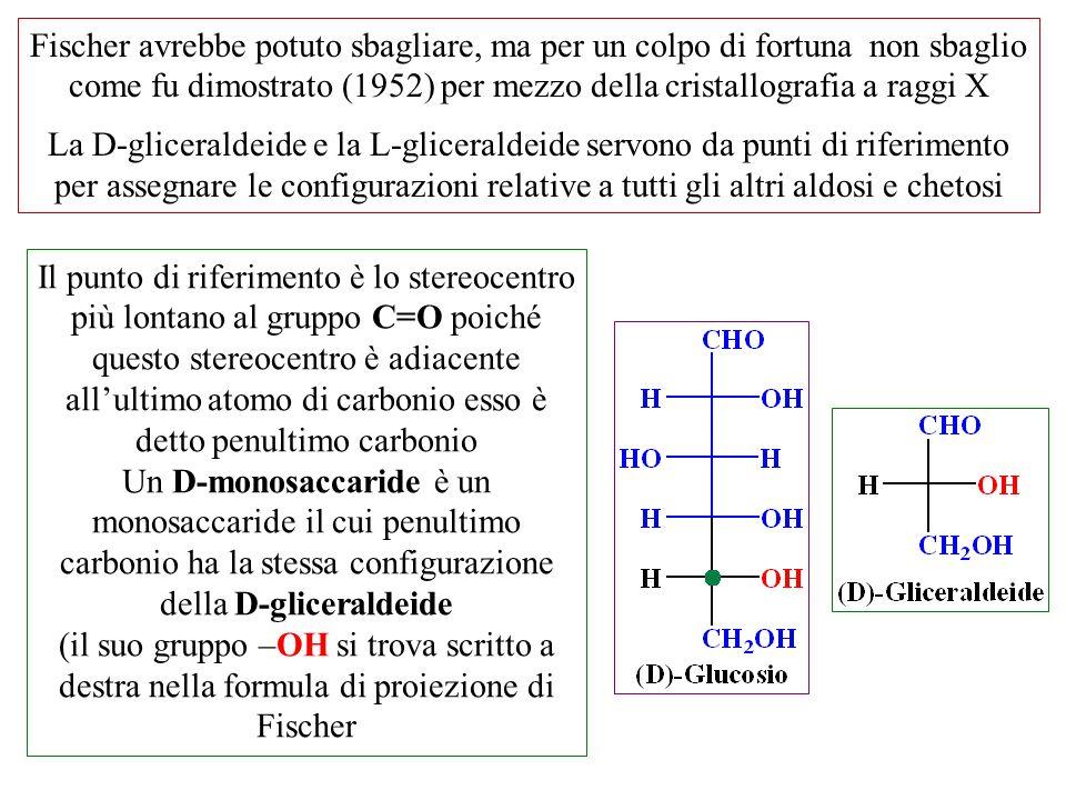 Fischer avrebbe potuto sbagliare, ma per un colpo di fortuna non sbaglio come fu dimostrato (1952) per mezzo della cristallografia a raggi X