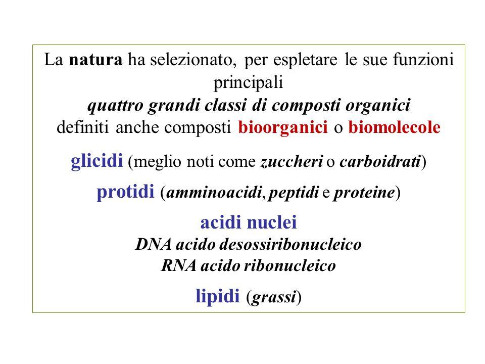 glicidi (meglio noti come zuccheri o carboidrati)