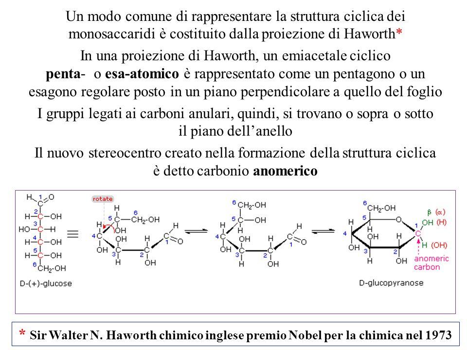 Un modo comune di rappresentare la struttura ciclica dei monosaccaridi è costituito dalla proiezione di Haworth*