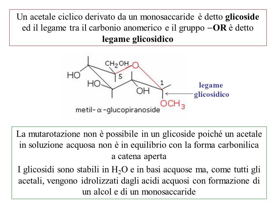 Un acetale ciclico derivato da un monosaccaride è detto glicoside ed il legame tra il carbonio anomerico e il gruppo -OR è detto legame glicosidico