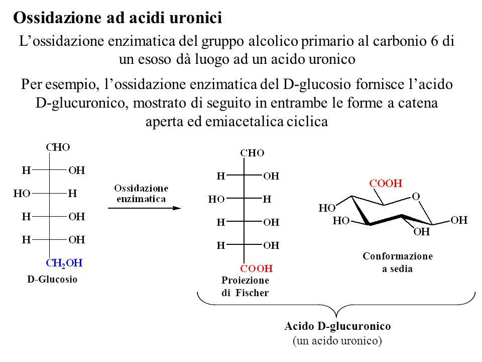 Ossidazione ad acidi uronici