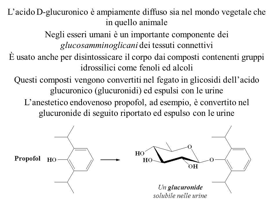 L'acido D-glucuronico è ampiamente diffuso sia nel mondo vegetale che in quello animale