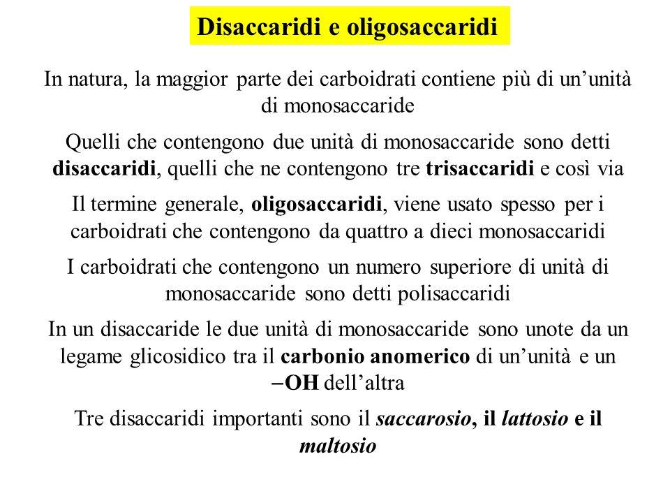 Disaccaridi e oligosaccaridi