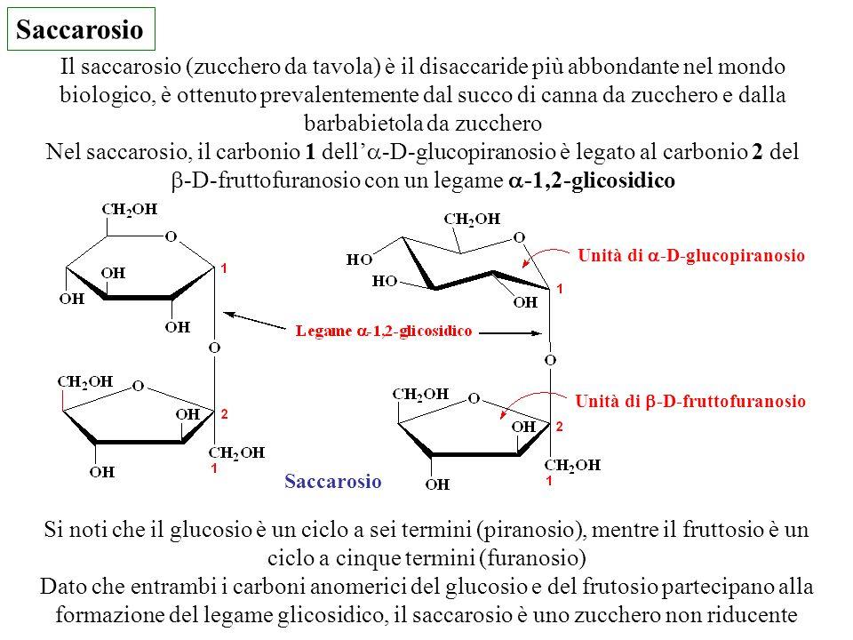 Saccarosio