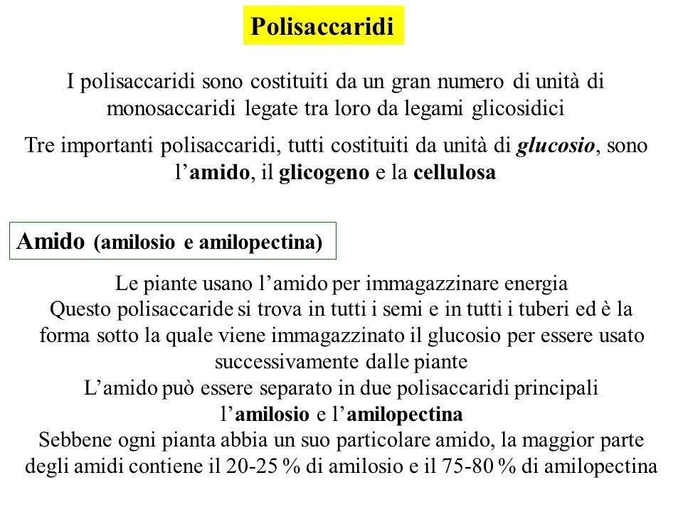 Polisaccaridi Amido (amilosio e amilopectina)