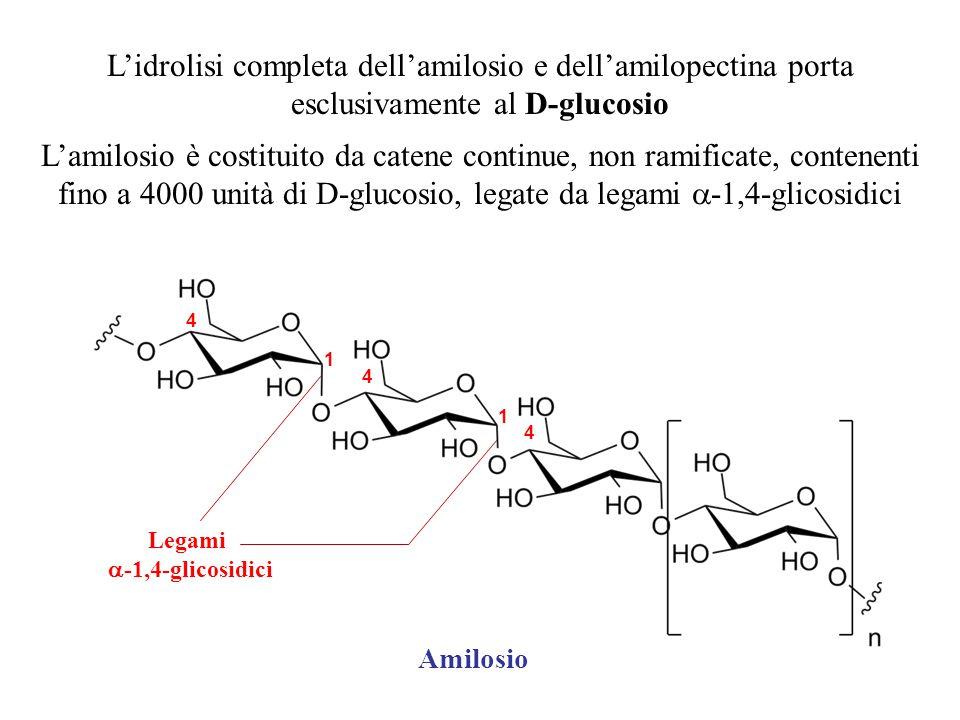 L'idrolisi completa dell'amilosio e dell'amilopectina porta esclusivamente al D-glucosio