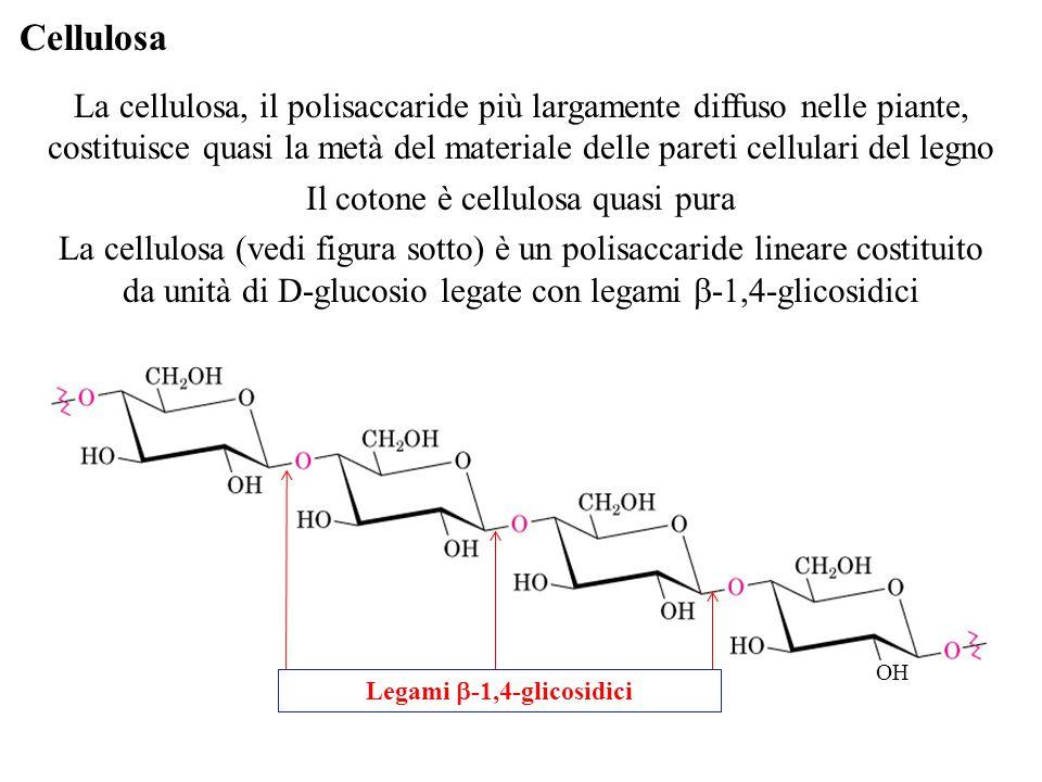Legami b-1,4-glicosidici