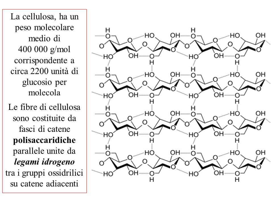 La cellulosa, ha un peso molecolare medio di 400 000 g/mol corrispondente a circa 2200 unità di glucosio per molecola