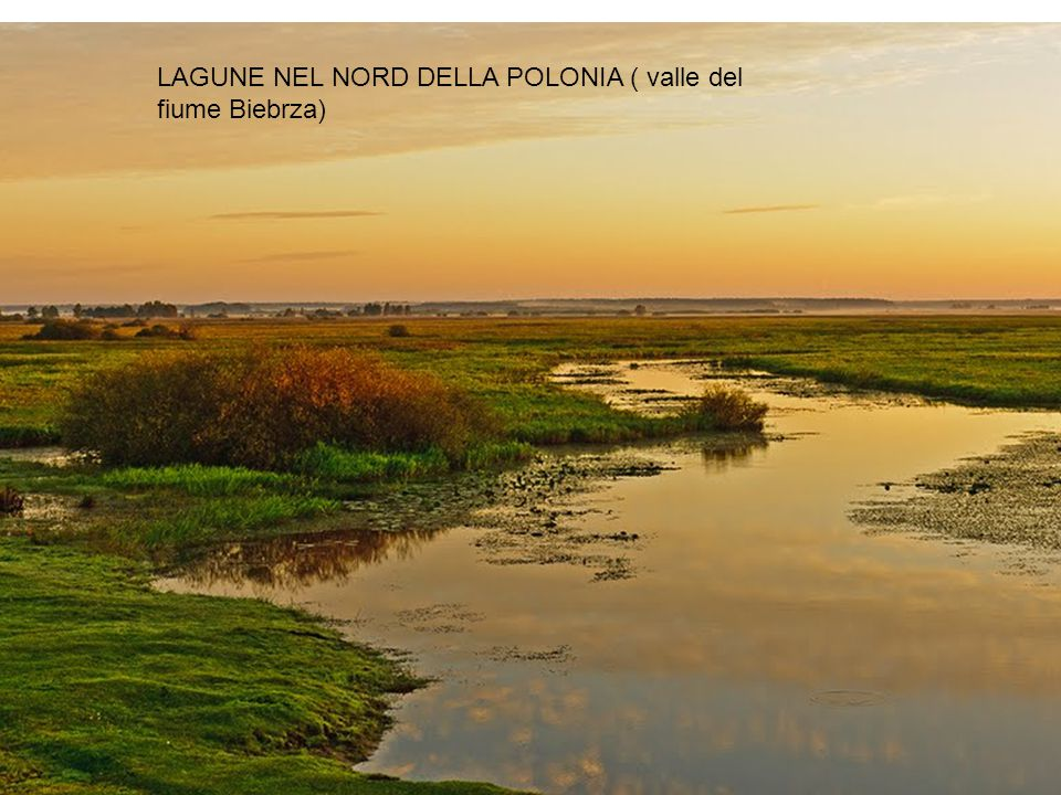 LAGUNE NEL NORD DELLA POLONIA ( valle del fiume Biebrza)