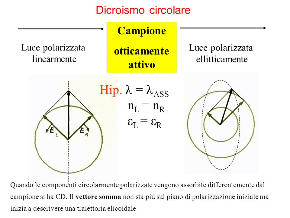 Hip.  = ASS nL = nR L = R Dicroismo circolare Campione