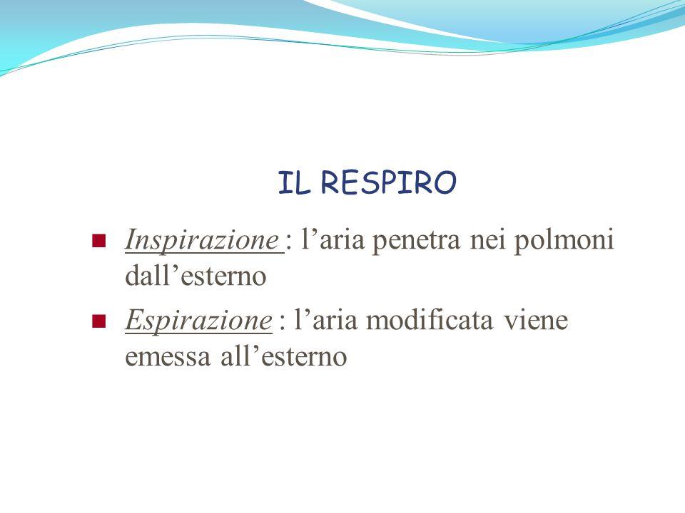 IL RESPIRO Inspirazione : l'aria penetra nei polmoni dall'esterno.