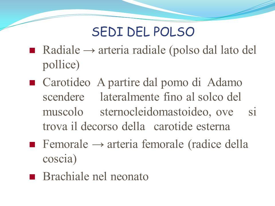 SEDI DEL POLSO Radiale → arteria radiale (polso dal lato del pollice)