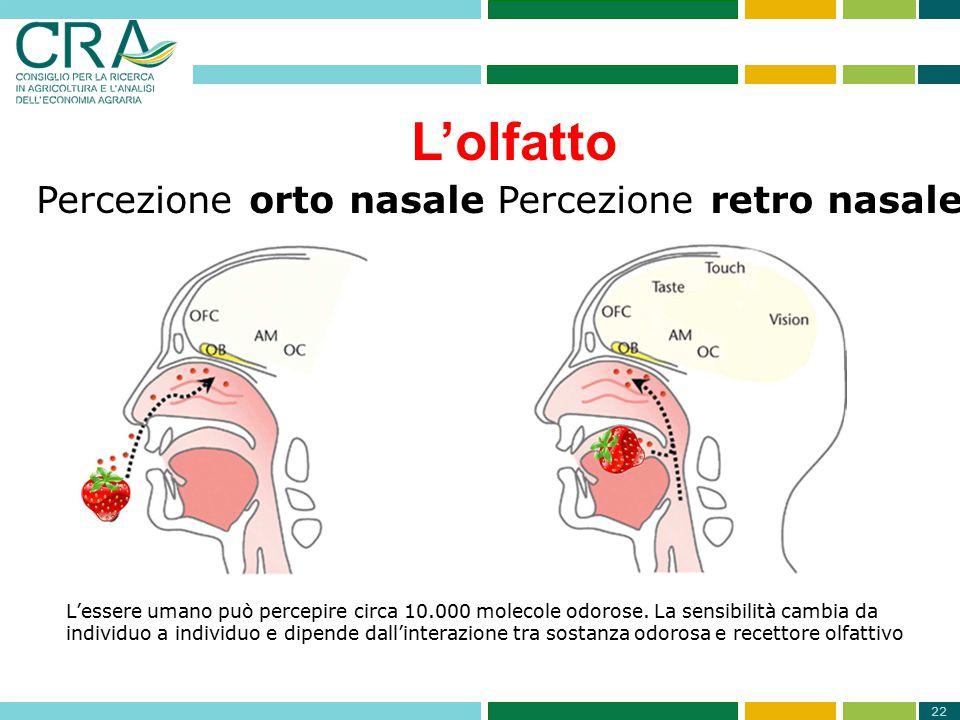 L'olfatto Percezione orto nasale Percezione retro nasale