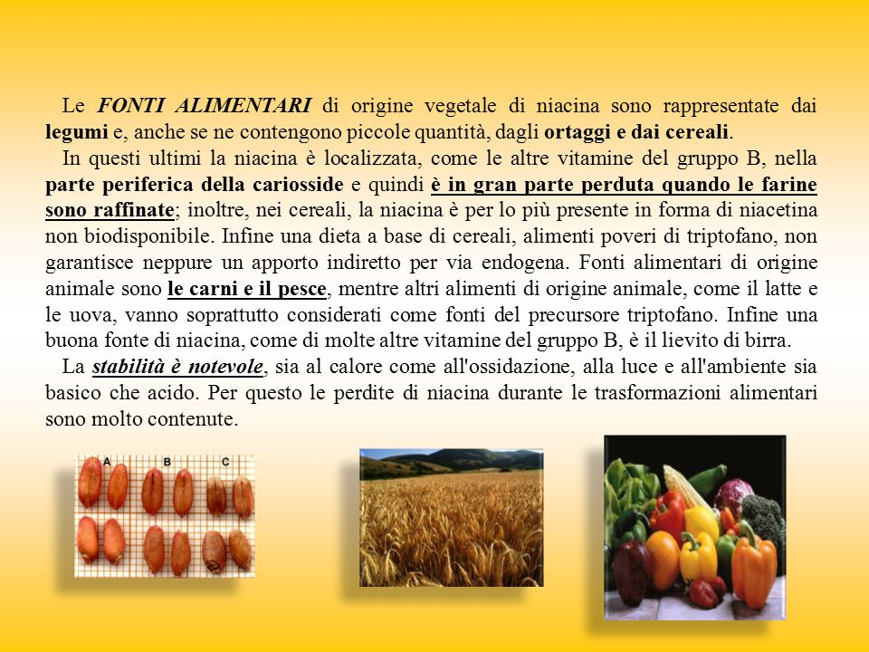Le FONTI ALIMENTARI di origine vegetale di niacina sono rappresentate dai legumi e, anche se ne contengono piccole quantità, dagli ortaggi e dai cereali.