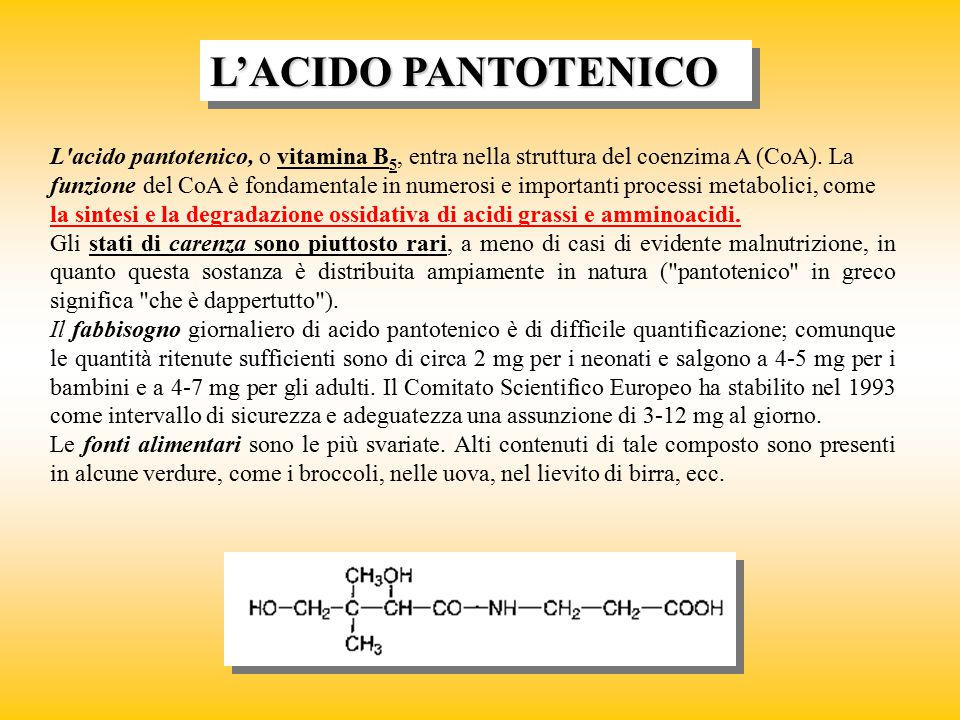 L'ACIDO PANTOTENICO
