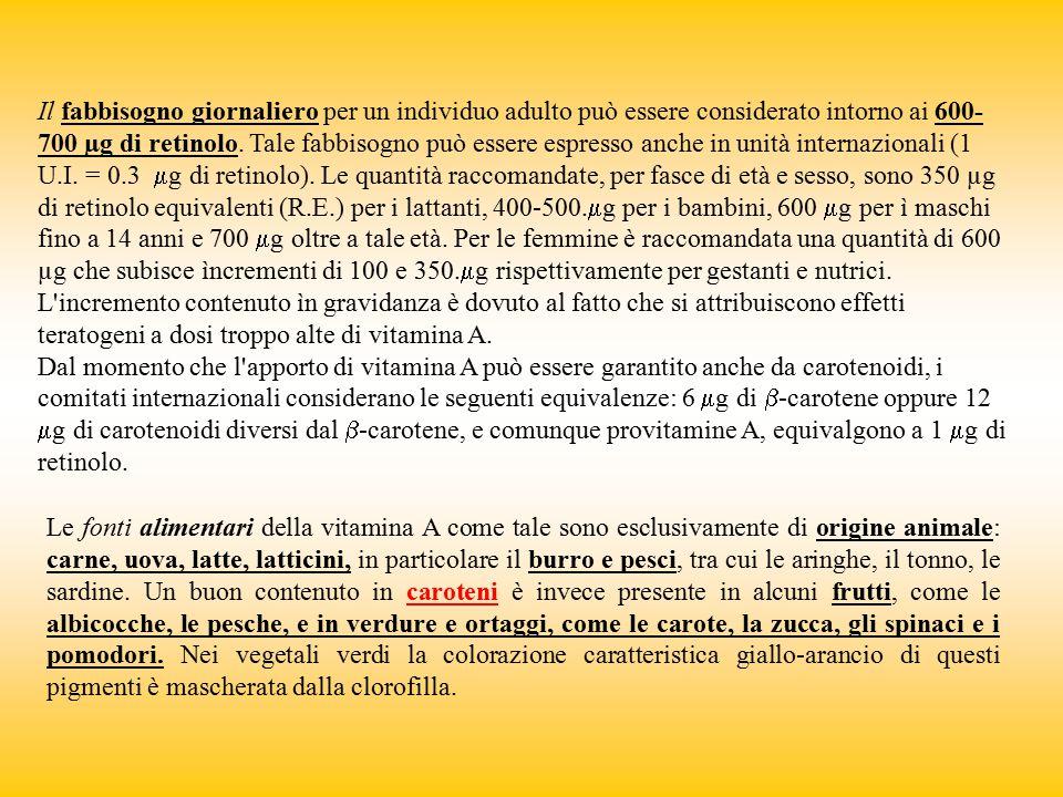 Il fabbisogno giornaliero per un individuo adulto può essere considerato intorno ai 600-700 µg di retinolo. Tale fabbisogno può essere espresso anche in unità internazionali (1 U.I. = 0.3 mg di retinolo). Le quantità raccomandate, per fasce di età e sesso, sono 350 µg di retinolo equivalenti (R.E.) per i lattanti, 400-500.mg per i bambini, 600 mg per ì maschi fino a 14 anni e 700 mg oltre a tale età. Per le femmine è raccomandata una quantità di 600 µg che subisce ìncrementi di 100 e 350.mg rispettivamente per gestanti e nutrici. L incremento contenuto ìn gravidanza è dovuto al fatto che si attribuiscono effetti teratogeni a dosi troppo alte di vitamina A.