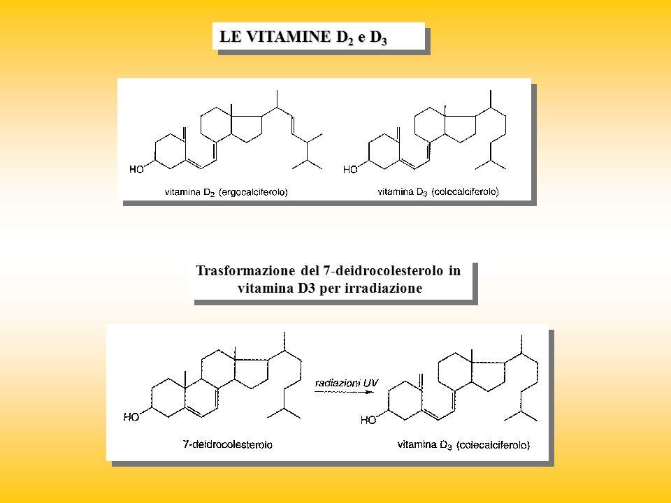 Trasformazione del 7-deidrocolesterolo in vitamina D3 per irradiazione