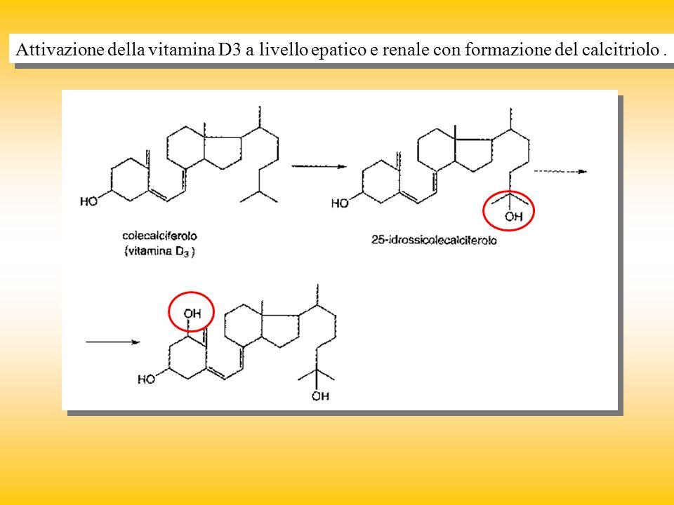 Attivazione della vitamina D3 a livello epatico e renale con formazione del calcitriolo .