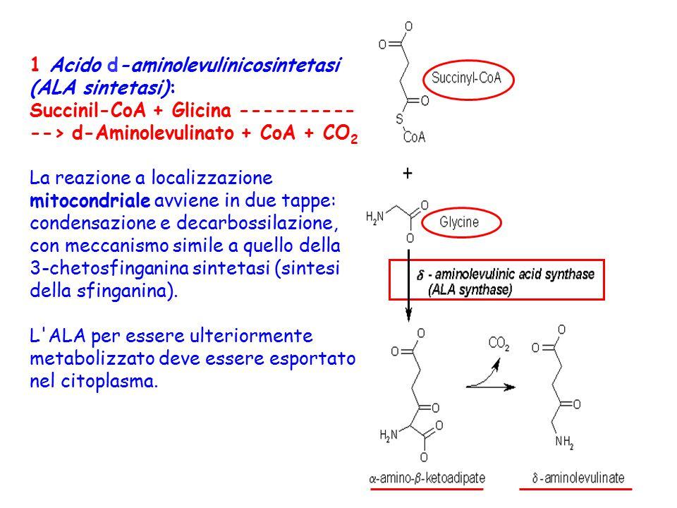 1 Acido d-aminolevulinicosintetasi (ALA sintetasi):
