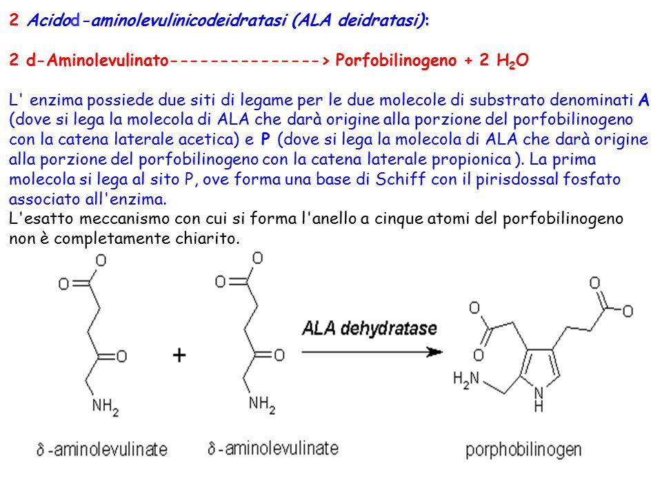 2 Acidod-aminolevulinicodeidratasi (ALA deidratasi):