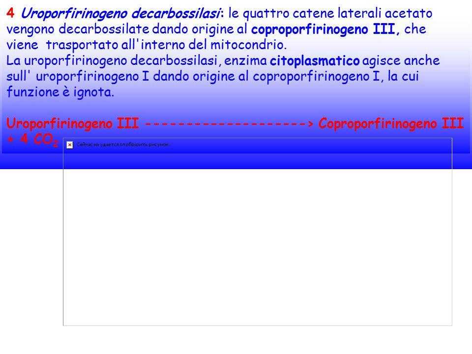 4 Uroporfirinogeno decarbossilasi: le quattro catene laterali acetato vengono decarbossilate dando origine al coproporfirinogeno III, che viene trasportato all interno del mitocondrio.