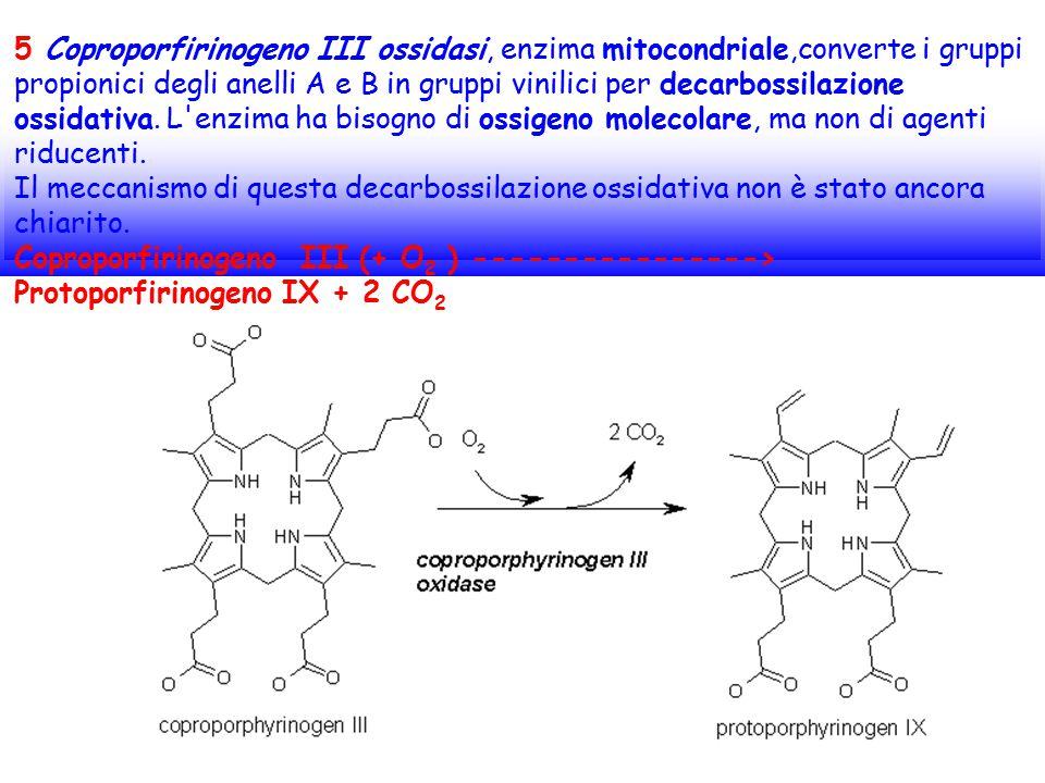 5 Coproporfirinogeno III ossidasi, enzima mitocondriale,converte i gruppi propionici degli anelli A e B in gruppi vinilici per decarbossilazione ossidativa. L enzima ha bisogno di ossigeno molecolare, ma non di agenti riducenti. Il meccanismo di questa decarbossilazione ossidativa non è stato ancora chiarito.