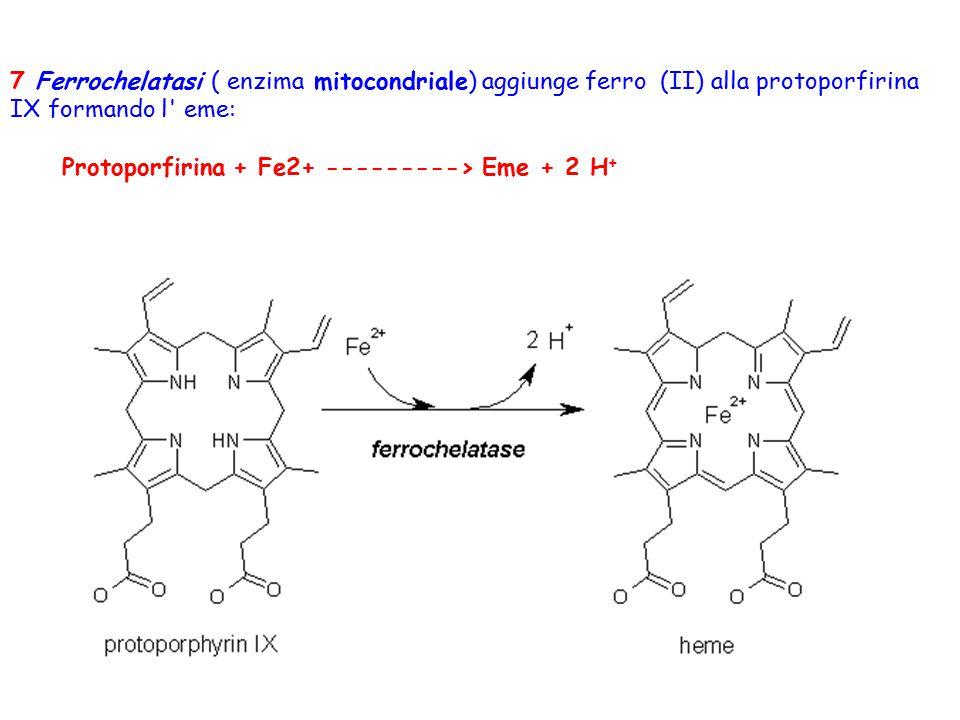 7 Ferrochelatasi ( enzima mitocondriale) aggiunge ferro (II) alla protoporfirina IX formando l eme: